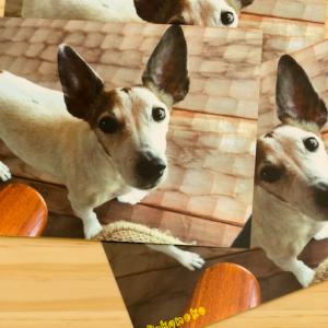 گفتن ویژگی های شخصیتی شما از روی سگ مورد علاقه تان