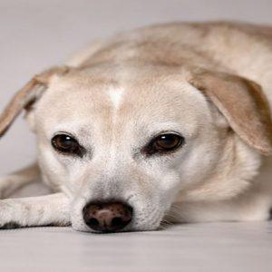 توانایی سگ ها در شناسایی آدم های بد
