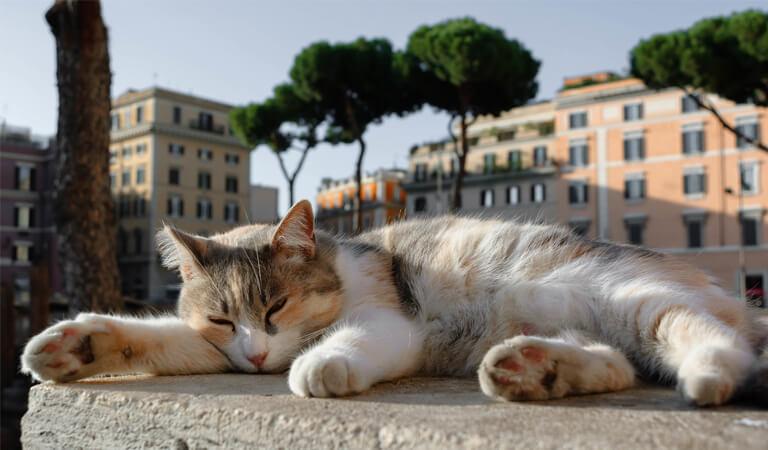 جاهای دیدنی رم - از مخفیگاه گربهها دیدن کنید