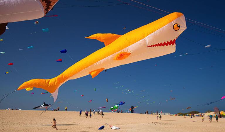 جزایر قناری - از فستیوال سالیانه بادباک لذت ببرید