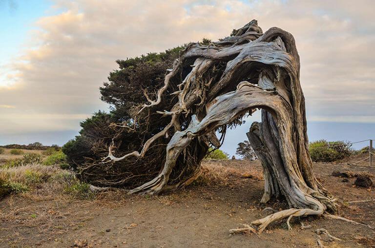 جزایر قناری - در اطراف الهیرو پیادهروی کنید