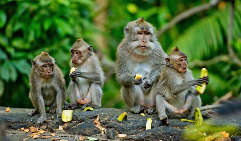 جزیره بالی - با یک میمون سلفی بگیرید
