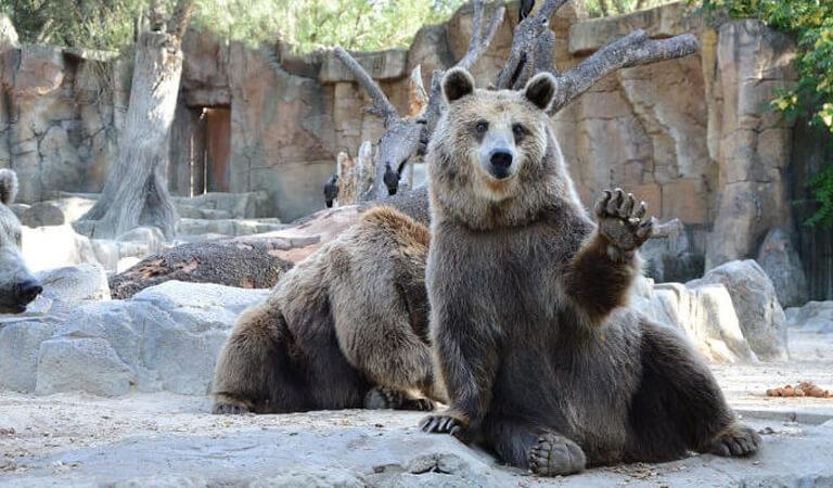 جاهای دیدنی سوئیس - پارک خرس – تعامل با خرسها