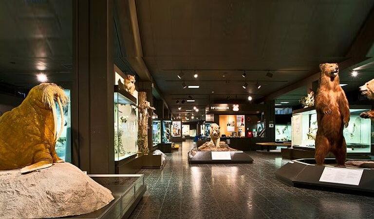 جاهای دیدنی سوئیس - موزه جانورشناسی