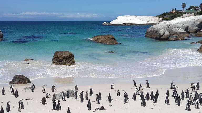 زيباترين سواحل دنيا - ساحل تخته سنگ - کیپ تاون، آفریقای جنوبی