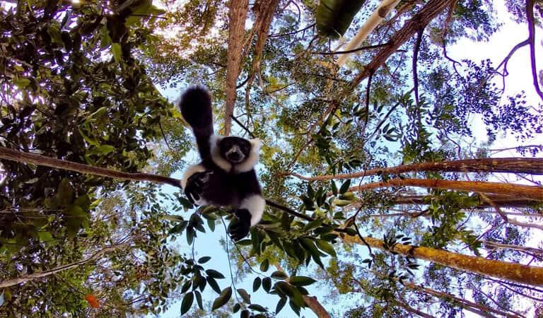 جزیره ماداگاسکار - پارک ملی کوه امبر