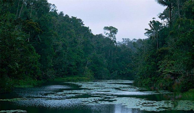 جزیره ماداگاسکار - منطقه حفاظت شده ویژه آنالامازواترا (پرینت)
