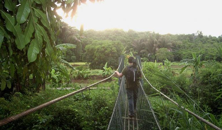 جزیره ماداگاسکار - پارک ملی آنکارافانتسیکا