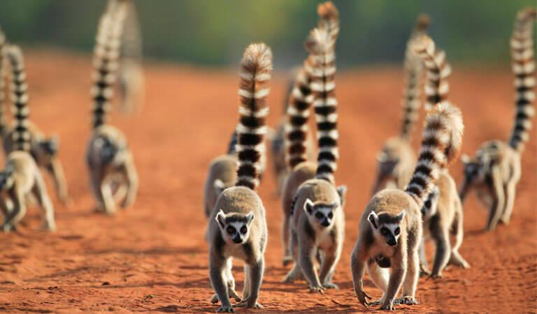 جزیره ماداگاسکار - منطقه حفاظت شده برنتی