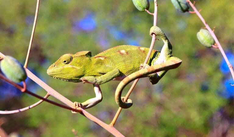 جزیره ماداگاسکار - جنگل کیریندی