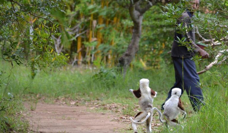 جزیره ماداگاسکار - پارک میمونهای لمور (پوزهدار)