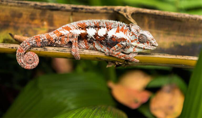 جزیره ماداگاسکار - پارک ملی لوکوب (منقطه حفاظت شده لوکوب)