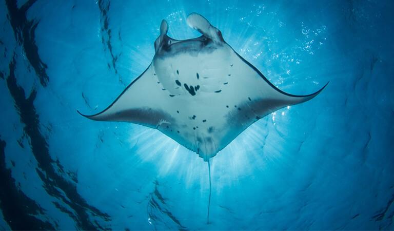جزایر هاوایی - غواصی شبانه سفره ماهیها