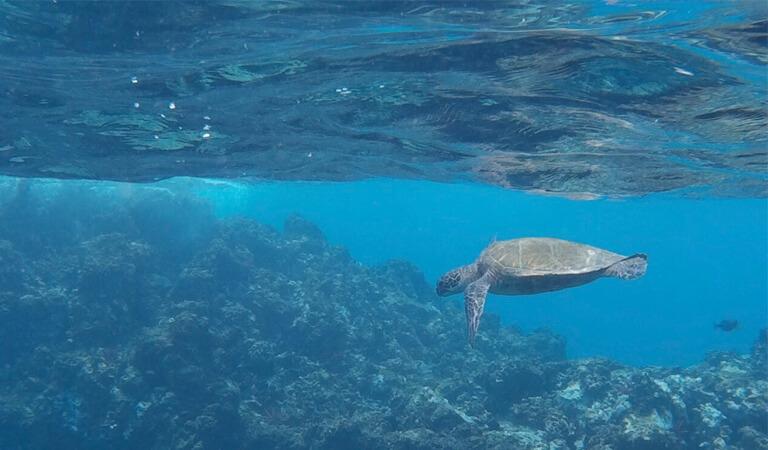 جزایر هاوایی - غواصی ماجراجویانه