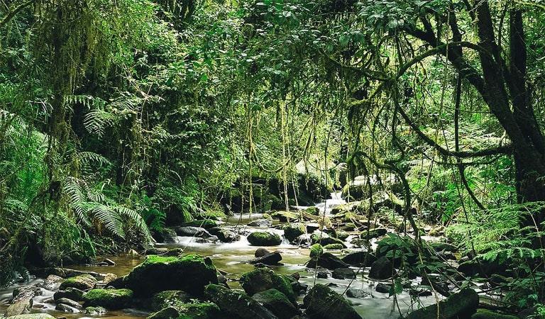 جزیره ماداگاسکار - پارک ملی رانومافانا