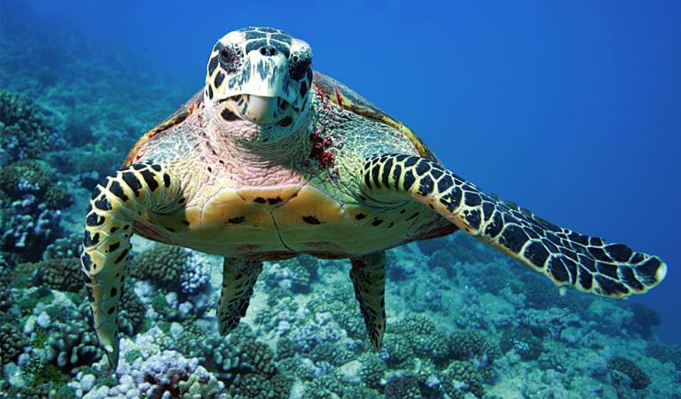 جزایر هاوایی - غروب آفتاب همراه با لاکپشتهای دریایی