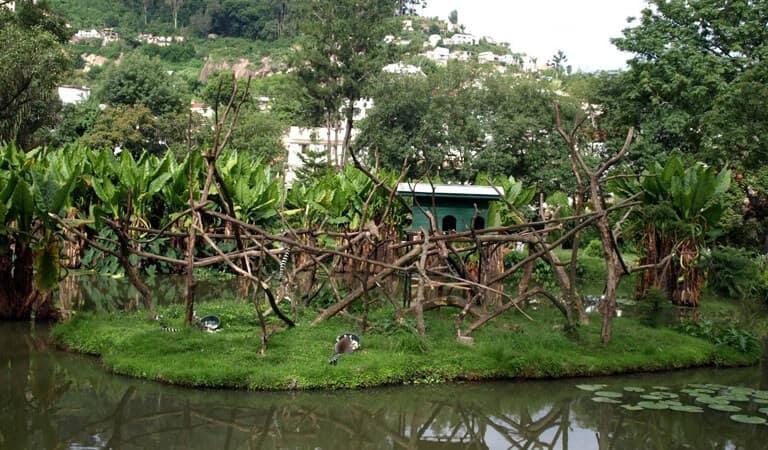 جزیره ماداگاسکار - باغهای گیاهشناسی و جانورشناسی زیمبازازا